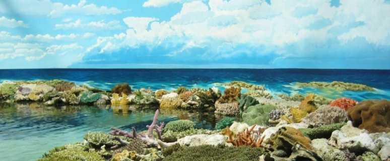 большой баръерный риф
