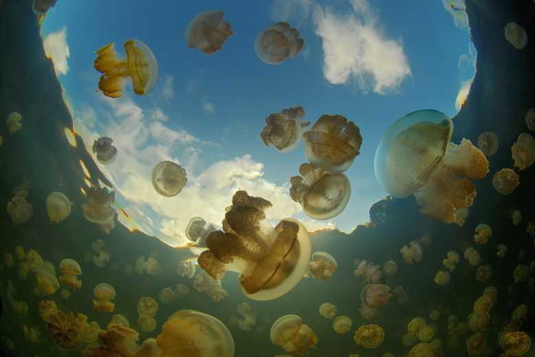 медузы1