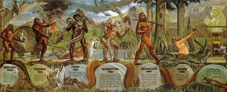 история эволюции и история человека