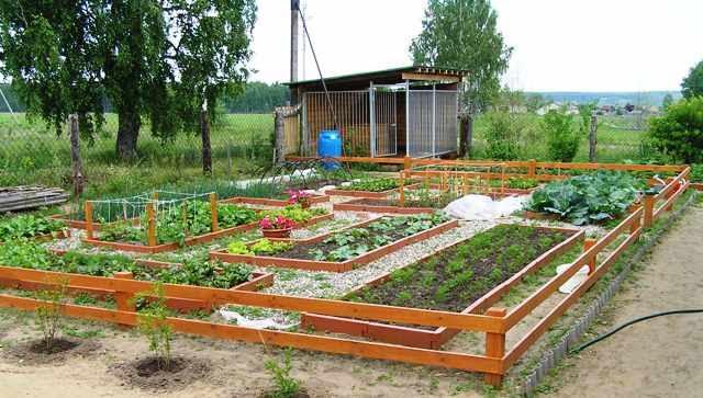 Где старые сорта овощей, кому выгодна их пропажа и что делать? 2