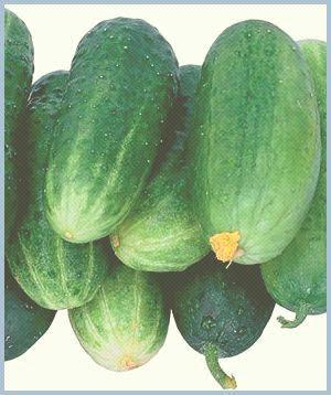 Где старые сорта овощей, кому выгодна их пропажа и что делать? 1