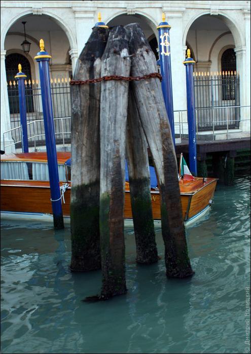 Лиственница в Венеции