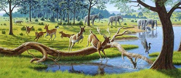 Кайнозойская эра Земли. От Палеогена до наших дней 2