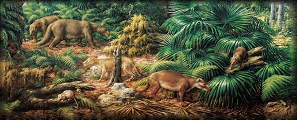Кайнозойская эра Земли. От Палеогена до наших дней 1