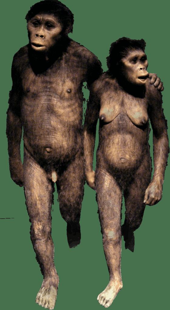 Эволюция человека – древний человек и этапы развития 1